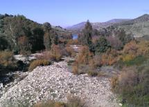 A 500 metros desemboca el Guadalete en el Pantano